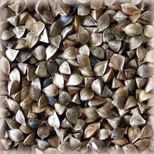 Volca sarrasin : Malt de sarrasin bio base et torréfié local et artisanal pour brasseurs professionnels et amateurs Auvergne, buckwheat