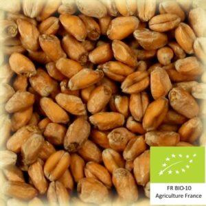Volcablé 10 : Malt de blé bio local et artisanal pour brasseurs professionnels et amateurs Auvergne, froment, wheat