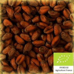 Volcablé torref 100 : Malt de blé torréfié bio local et artisanal pour brasseurs professionnels et amateurs Auvergne, froment, wheat crystal