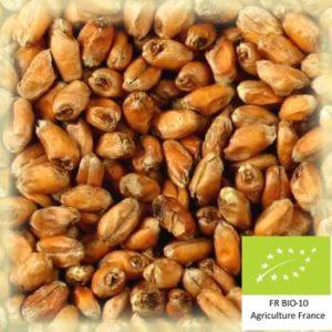 Volcablé torref 25 : Malt de blé torréfié bio local et artisanal pour brasseurs professionnels et amateurs Auvergne, froment, wheat munich