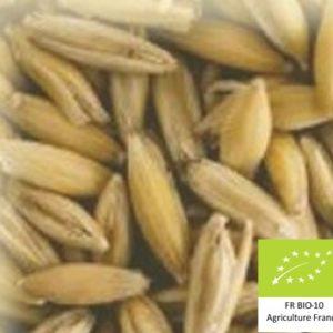 Volc'avoine : Malt d'avoine bio local et artisanal pour brasseurs professionnels et amateurs Auvergne, oat
